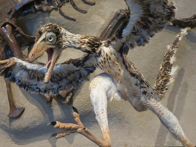 始祖鳥(しそちょう)