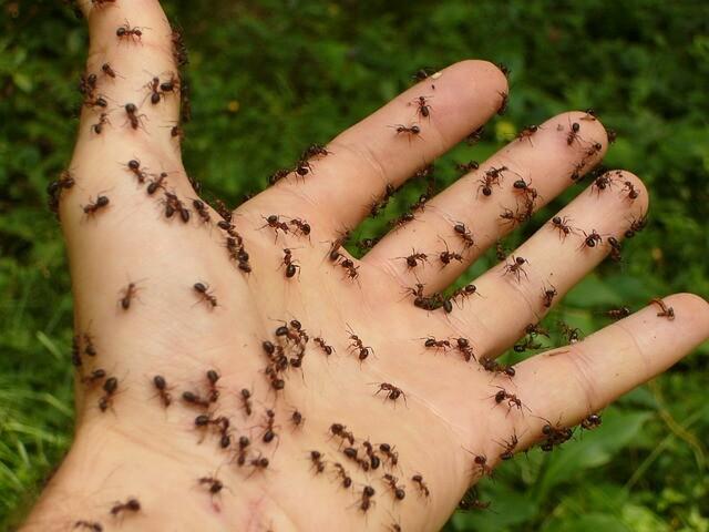 ムシムシの実 モデル「アリ」