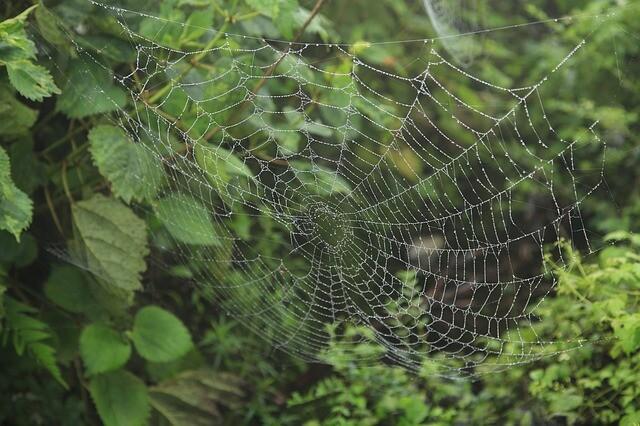 蜘蛛の巣がき(クモのすがき)